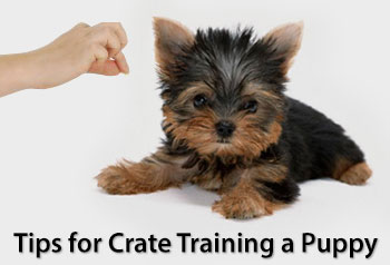 Tips for Crate Training a Puppy