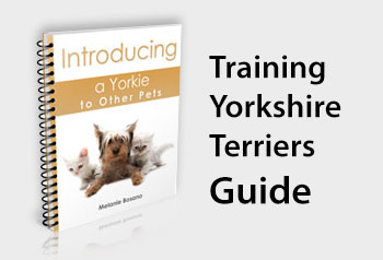 Training Yorkshire Terriers Guide
