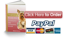 Training Yorkshire Terriers - Buy Now