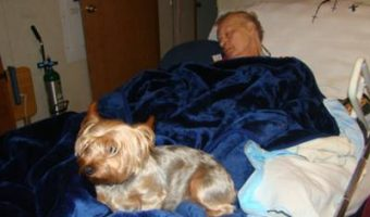 our yorkie shows us forever love