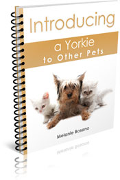 Introducing a Yorkie to Other Pets