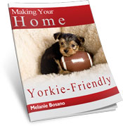 Making Your Home Yorkie Friendly