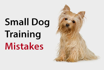 Small Dog Training Mistakes